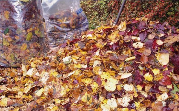 Bunter Laubhaufen im  Herbst