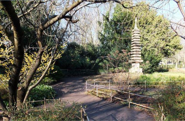 Karlsruhe, Stadtgarten - Japanischer Garten mit  13-stöckiger Pagode. Links eine blühende Zaubernuss (Hamamelis)