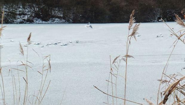 Planten un Blomen, Hamburg - Ende Januar - Der Wallgraben ist zugefroren ... Die Möwen rasten .
