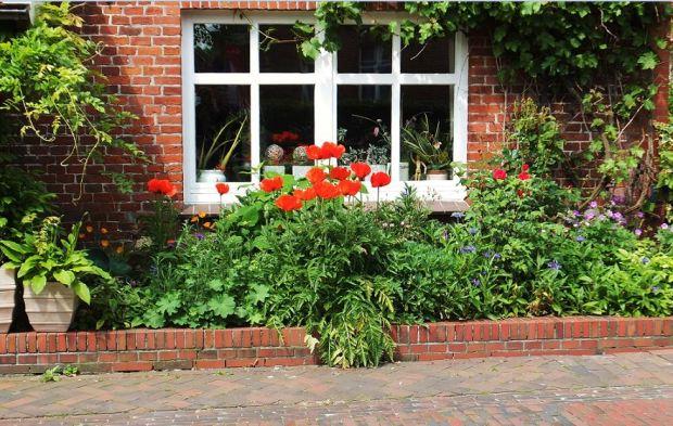 Ostfriesland - ... und immer wieder in den Dörfen und Gemeinden: Blütenpracht in den Gärten (hier: Ditzum)