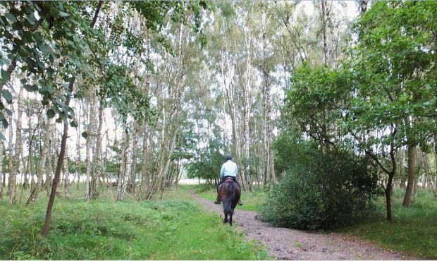 Boberger Niederung (Boberger Dünen) - Zu Fuß, per Rad oder mit dem Pferd - alles ist möglich.