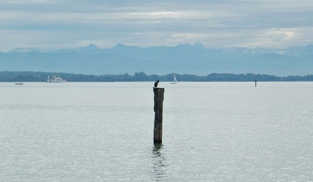 Kormoran im Bodensee mit Alpenpanorama - Die Sonne braucht noch etwas ...