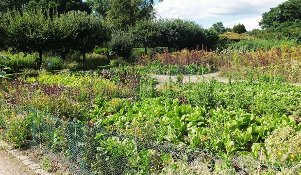 Hamburg - Loki-Schmidt-Garten - Kohlsorten,, Salate, Gemüse und Kräuter im Nutzgartenbereich ...