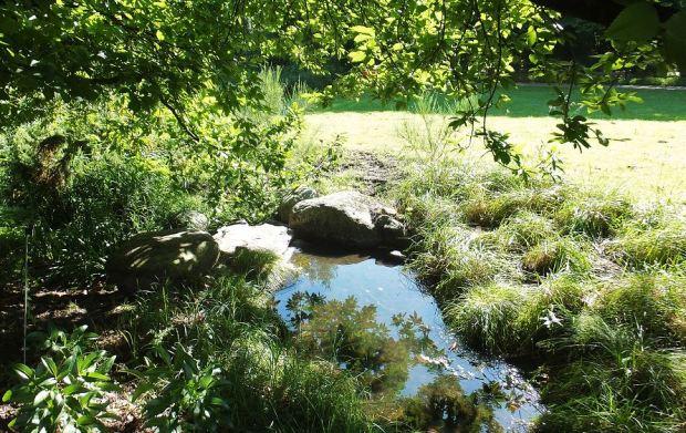 Hamburg - Loki-Schmidt-Garten (Wasser, Moorbereich)