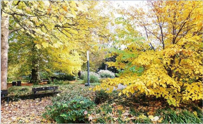 Hamburg - Planten un Blomen im Herbst - Laubfärbung (gelb)