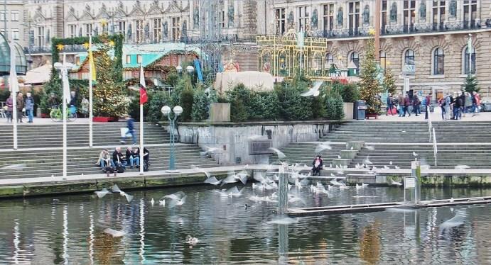 Hamburg im Advent - An der Kleinen Alster - Gedanken an Vogelgrippe? (Möwen)