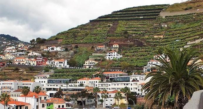 Madeira - Camara de Lobos - Anbau von Wein etc. auf den Terrassen am Hang ...